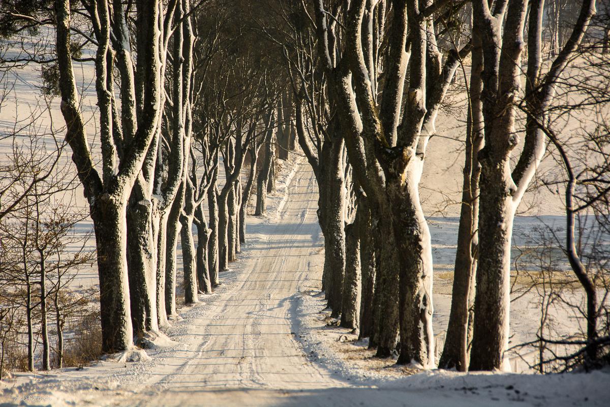 Droga do Kierzbunia