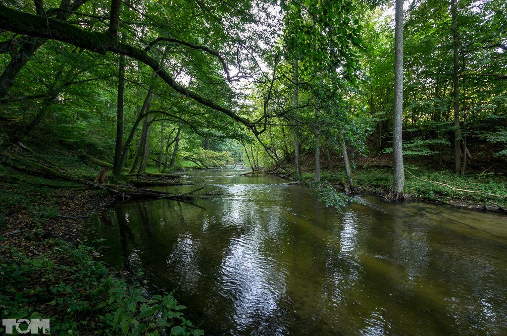 Las Warmiński, rzeka Łyna