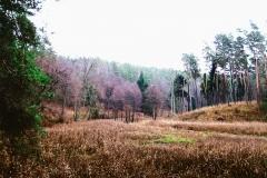 Łąka po osuszonym jeziorze, przed Oczkiem