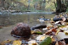 Łyna w Lesie Warmińskim