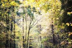 Ścieżka w Lesie Miejskim