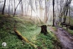 Ścieżki spacerowe w Rezerwacie Źródeł Łyny
