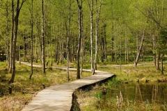 Arboretum Kudypy