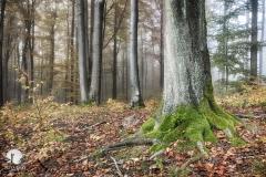 Buczyna, Rezerwat Łomy