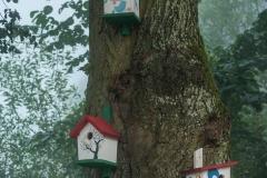 Bukwałd - budki dla ptaków
