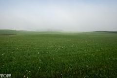 Bukwałd, pole