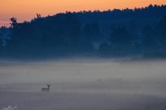 Czarny Kierz, okolice wioski o świcie