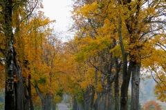 Droga Bęsia-Kolno