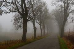 Droga do Łężan, kierunek pn-wsch.