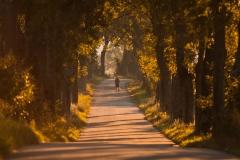Droga do Puszczy Boreckiej