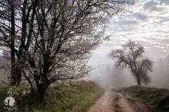 Droga do młyna, Łyna
