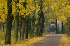Droga w Księżnie jesienią, kierunek północ