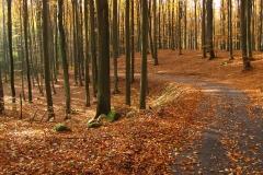 Droga w rezerwacie Kamienna Góra, kierunek pd-zach