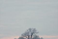 Drzewo na miedzy, okolice Kiersztanówka