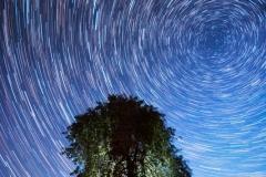 Drzewo na polach k. Garzewka