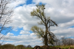 Drzewo na trasie Rozgity-Sętal