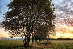 Drzewo w okolicach Mierek