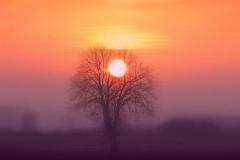 Drzewo w okolicach Tomaszkowa