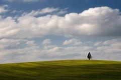 Drzewo w okolicy Starego Olsztyna