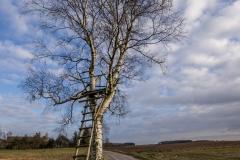 Drzewo widokowe przy drodze