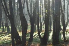 Frombork, graby w ogrodach kanonickich, kier. pd-wsch.