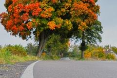 Jesienne drzewo przy drodze Tuławki-Gradki
