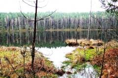 Jeziorko w rezerwacie Kukle