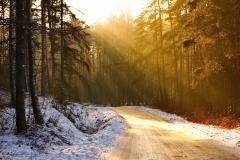 Kłębowo - droga przez las nad jezioro