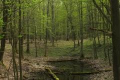 Las - źródła rzeki Łyny, Łyna, kier. pół. - wsch.