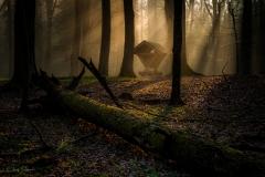 Las bukowy Różnowo