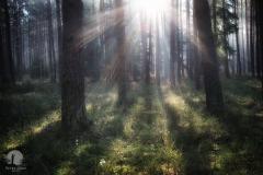 Las w okolicy Kudyp