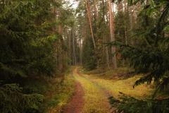 Leśna droga w okolicach Łańska