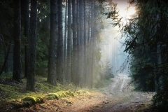 Leśna droga za Wymojem