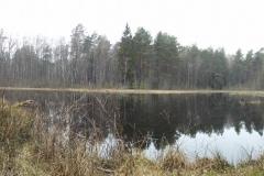Leśne jeziorko koło wsi Patryki, gm. Purda