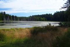Leśne rozlewisko, okolice wsi Kochanówka