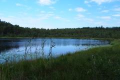 Leśny staw, okolice wsi Międzylesie