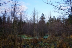 Leśne mokradło, okolice wsi Jagoty