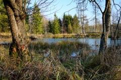 Leśne mokradło, okolice wsi Krekole