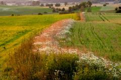 Miedza na polach Sętala