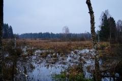 Mokradło, okolice wsi Łaniewo