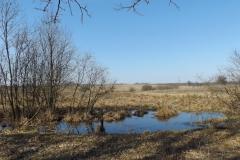 Mokradło w okolicy wsi Przykop, kier. połnocny