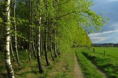 Orzechowo - droga przy lesie, kier. pd
