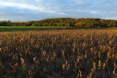 Panorama Fromborka od południa