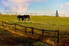 Pastwiska w Głotowie