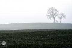 Pola w okolicach Studnicy