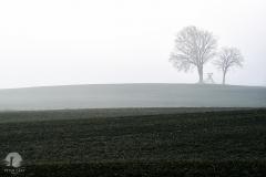 Pola w okolicy Studnicy