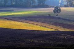Pola w okolicy Włodowa