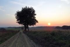 Polna droga w Bażynach, kier. pd-zach.