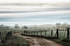 Polna droga w Kłobi
