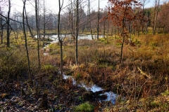 Polne mokradło, okolice wsi Sarnowo